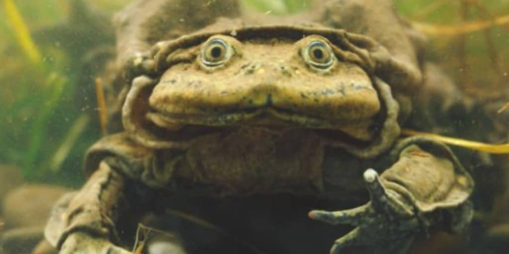 Government sat idly by, allowing thousands of frogs to die