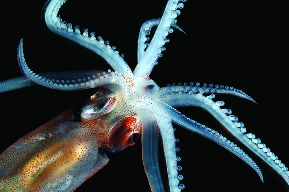 You won't believe these crazy mysteries from the ocean