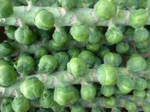 Brussel sprouts are a great source of sulforaphanes.