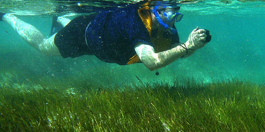 seagrass is dying out and it's more important than you think