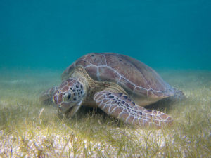 seagrass is a key species that helps humans more than we know