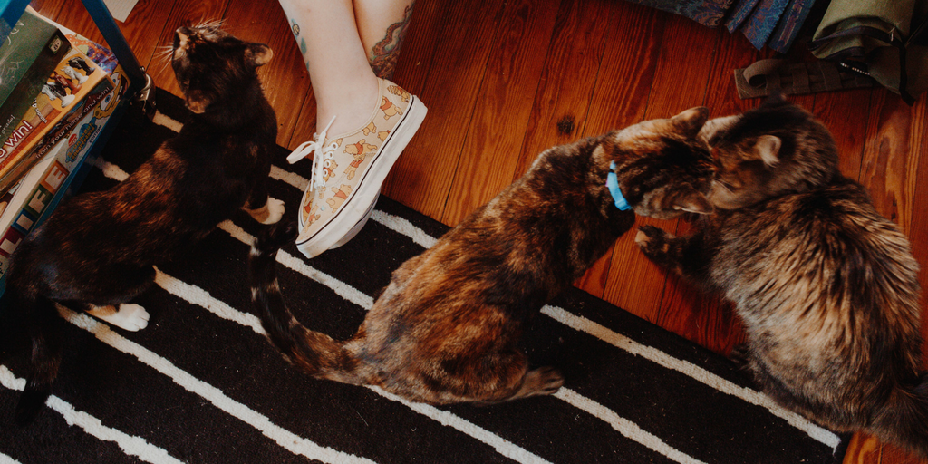Three cats surround a pair of human feet wearing Disney patterned sneakers.