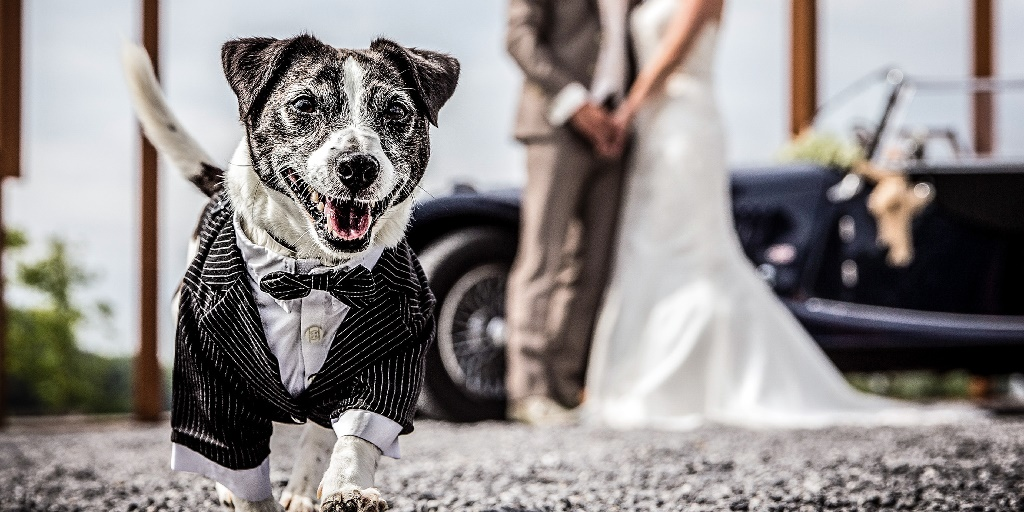 [Image description: A puppy wearing a suit and a bow tie stands in front of a newlywed couple. Image Source: Storytrender.com]