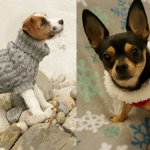 Two dogs wearing different types of sweaters.