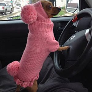 Dog in a car wearing a pink dog sweater
