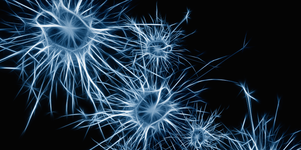 The image shows a number of lit-up spiky organisms. These are neurons.