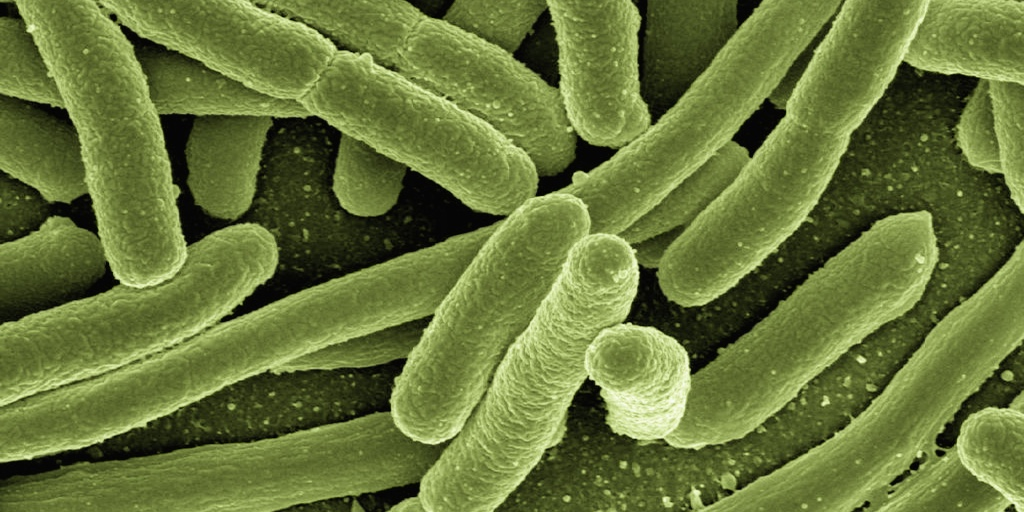 A microscopic image shows strings of light green, worm-like organisms.
