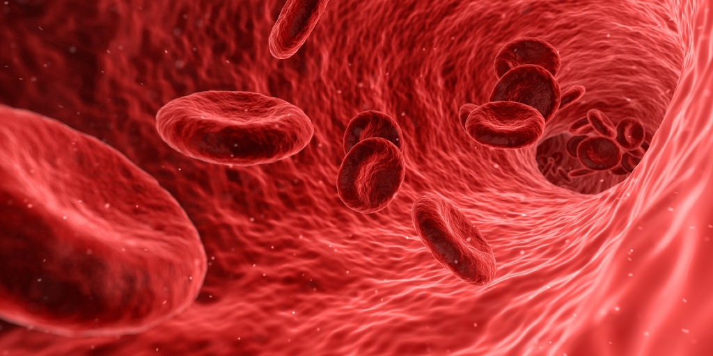 A microscopic image of inside a blood vessel is shown. Red Blood Cells - tiny, circular discs - are floating.