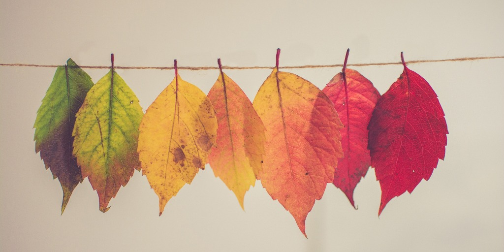 Leaves of different colors strung up on thread.
