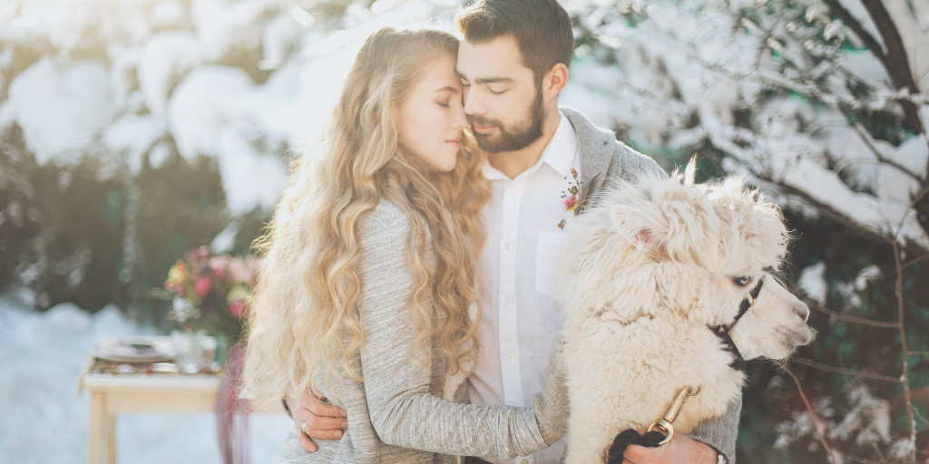 [Image description: A man, a woman, and a llama hold each other, very much in love.] Photo by Elina Sazonova from Pexels