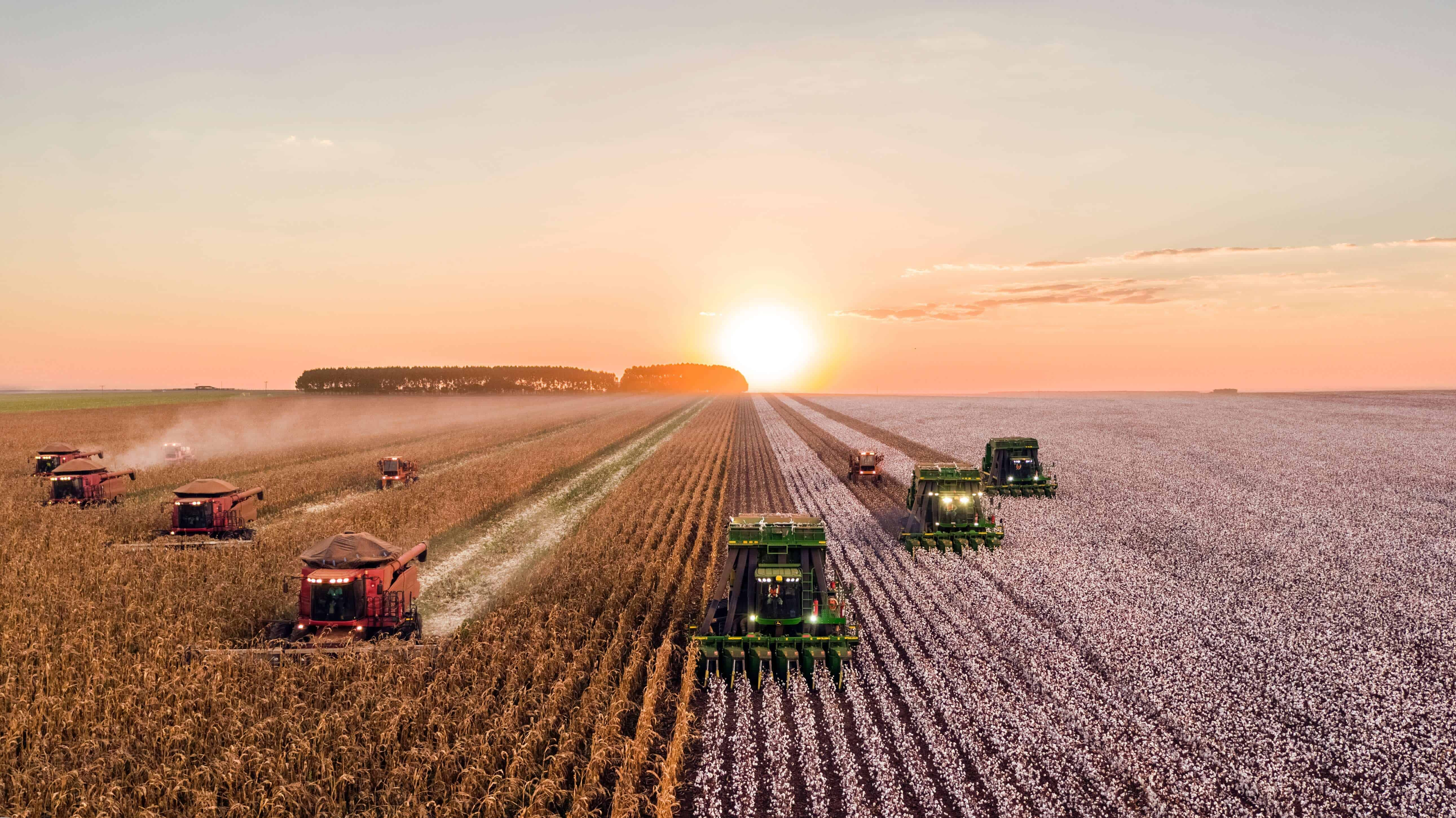 Several farm trucks on a crop field while the sunsets in the background.