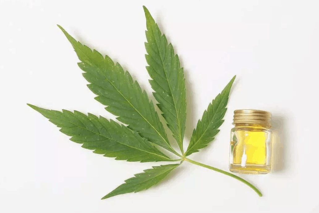 A five-leaf green herb lies against a white background next to a small vial of yellow oil.