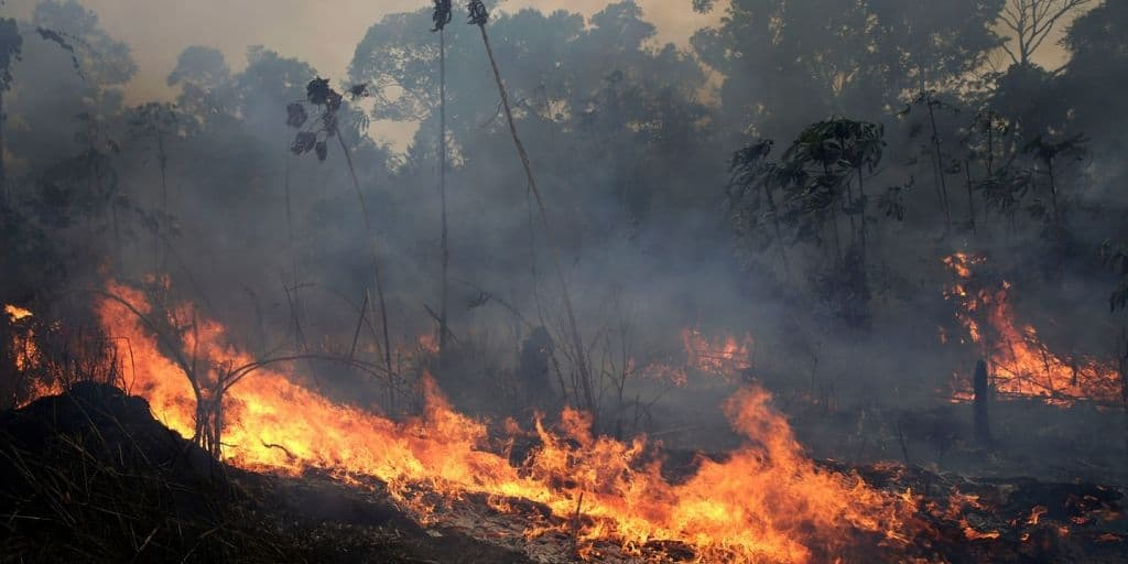 [Image description: A smoky fire burns against the silhouette of a line of trees] via AP Photos/Eraldo Perez via Harvard Gazette (https://news.harvard.edu/gazette/story/2019/08/harvard-biologist-discusses-the-environmental-impact-of-the-amazon-fires/)