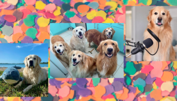 This is how your dog account can go viral on Instagram and Twitter