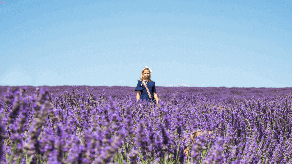 [Girl standing in a field of lavender] Via Unsplash