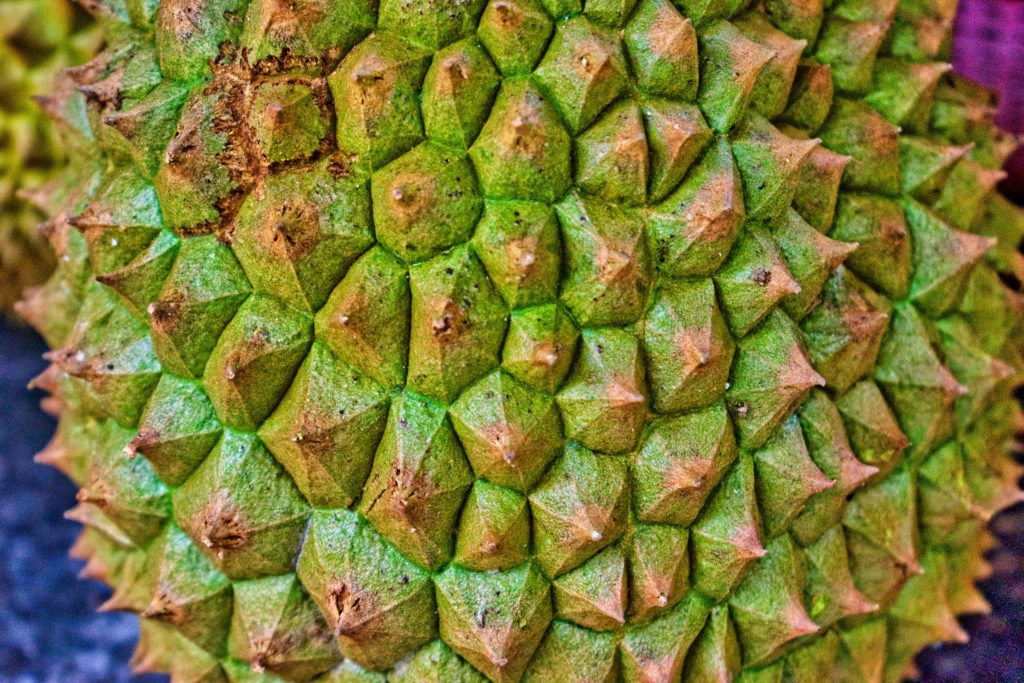 Closeup of spiky green durian Skin