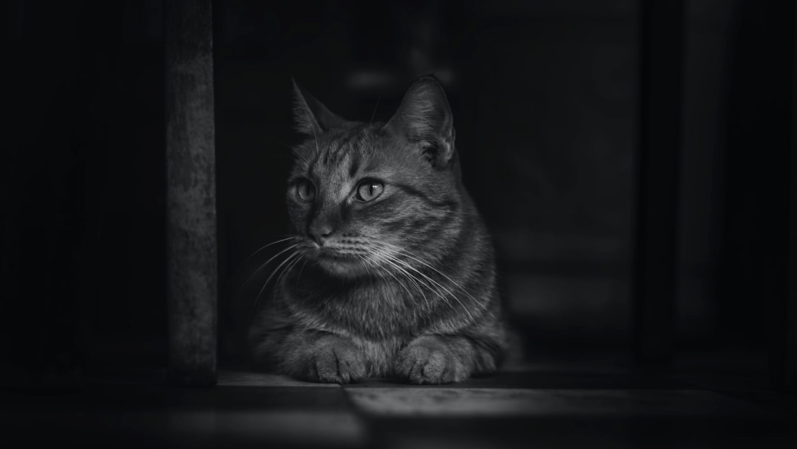 A black and white image of a cat that's looking on the side.