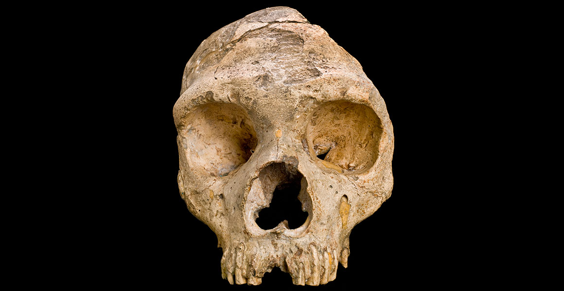 The firAncient figurines wearing short skirts and bracelets.st discovered Neanderthal skull.