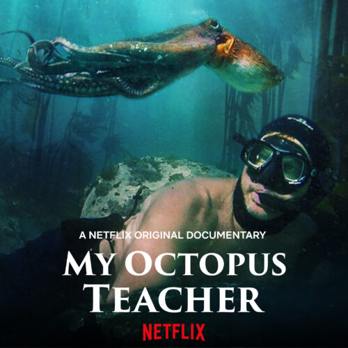The poster to My Octopus Teacher available on Netflix
