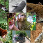A collage of endangered species.