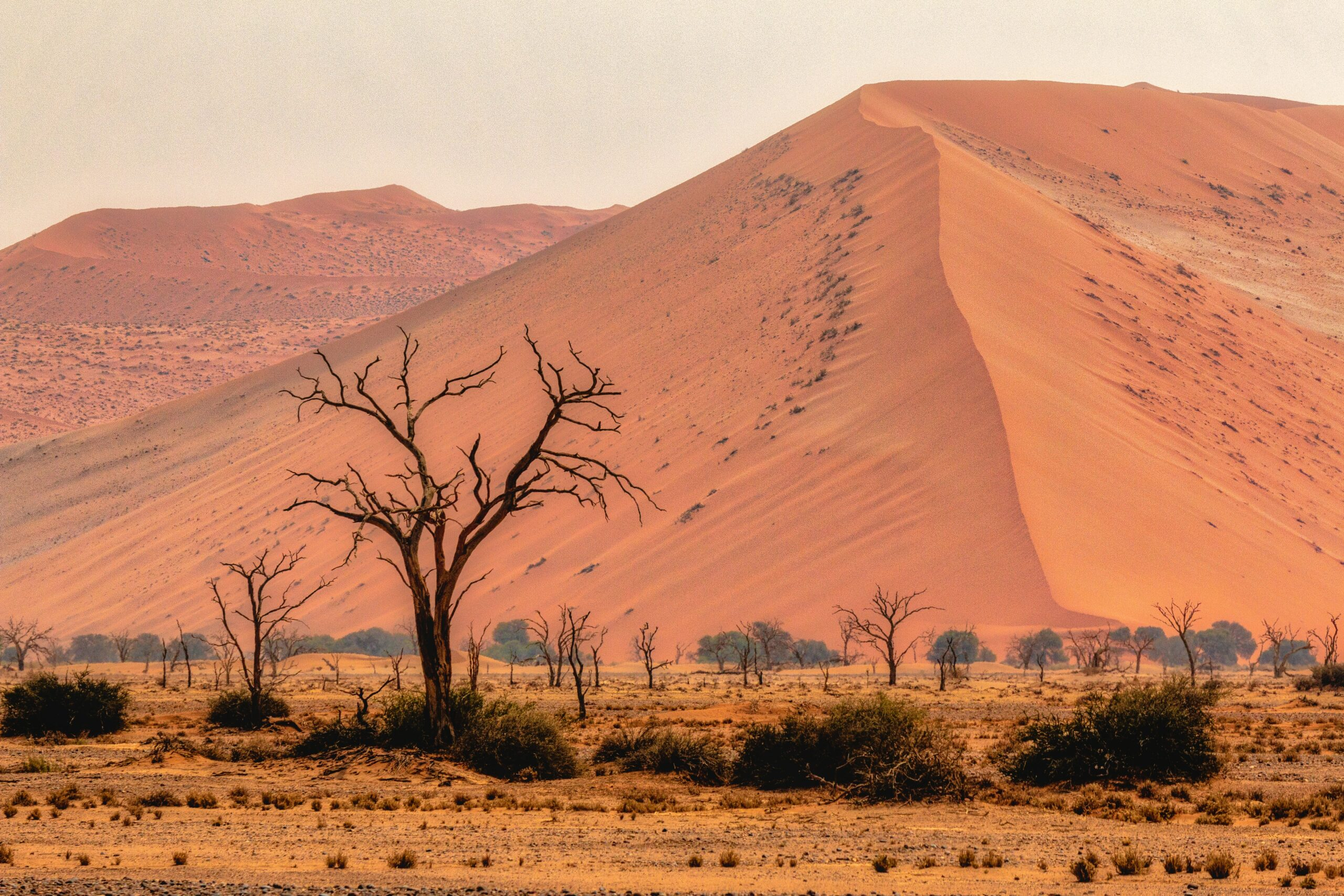 The serene sand dunes in Namibia